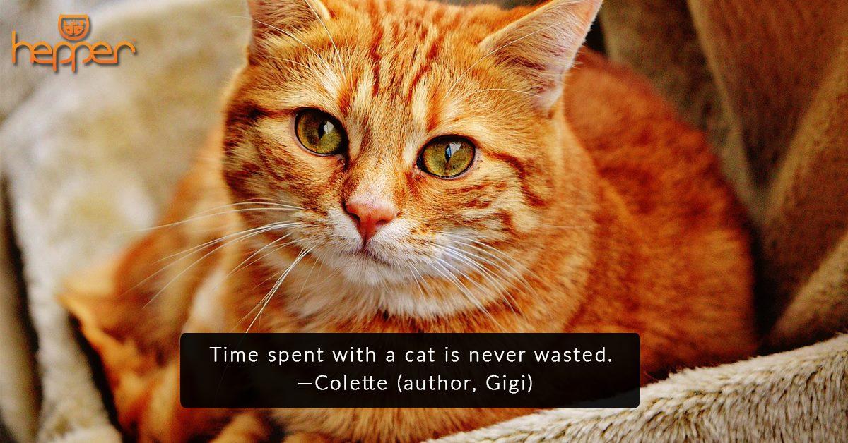 Best Cat Quotes – Colette
