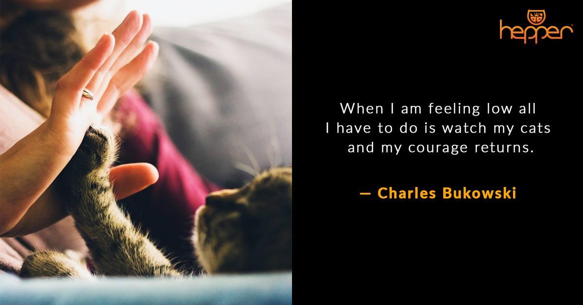 Best Cat Quotes – Charles Bukowski