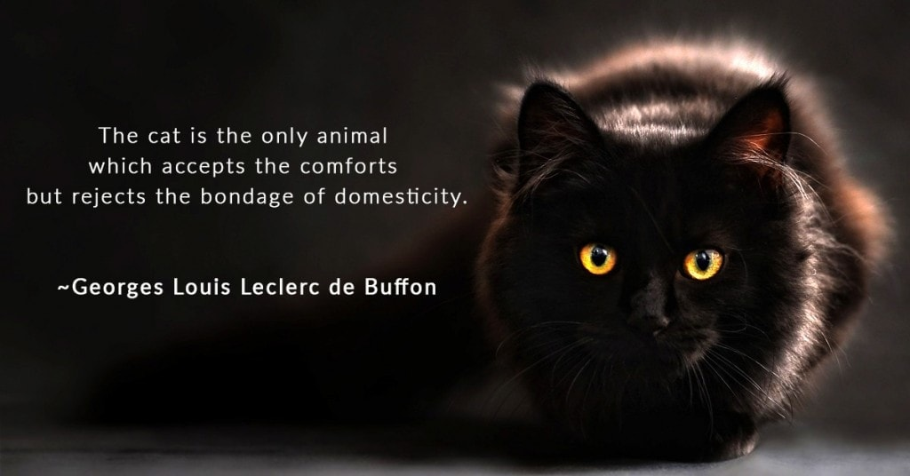 Best Cat Quotes - Georges de Buffon - Hepper