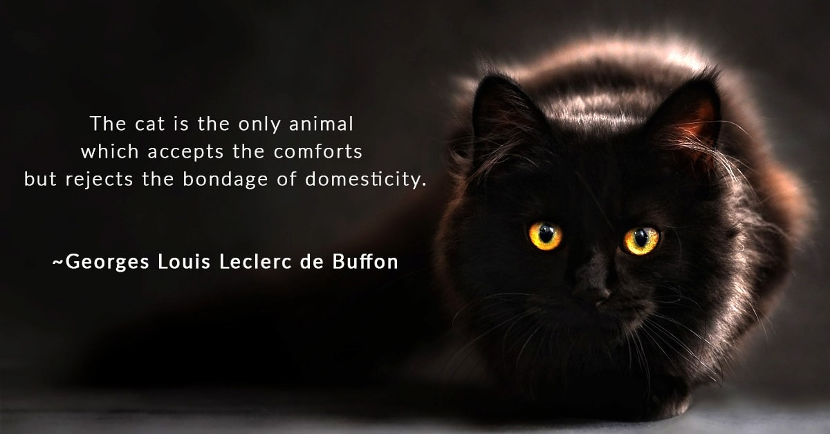 Best Cat Quotes – Georges de Buffon