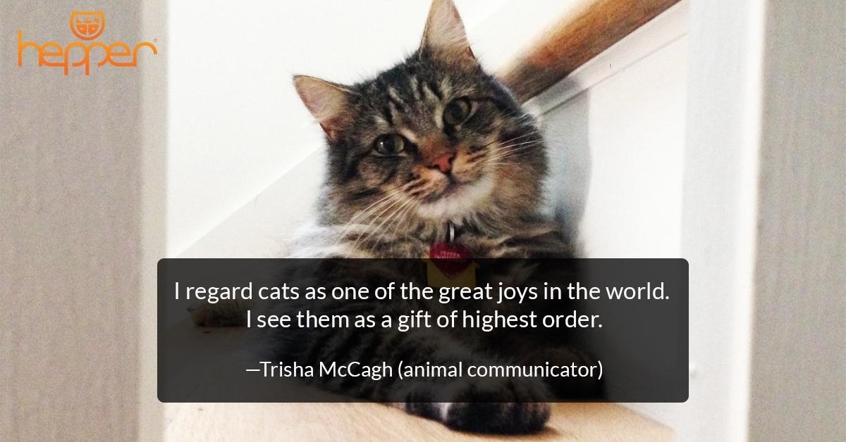 Best Cat Quotes –  Trisha McCagh
