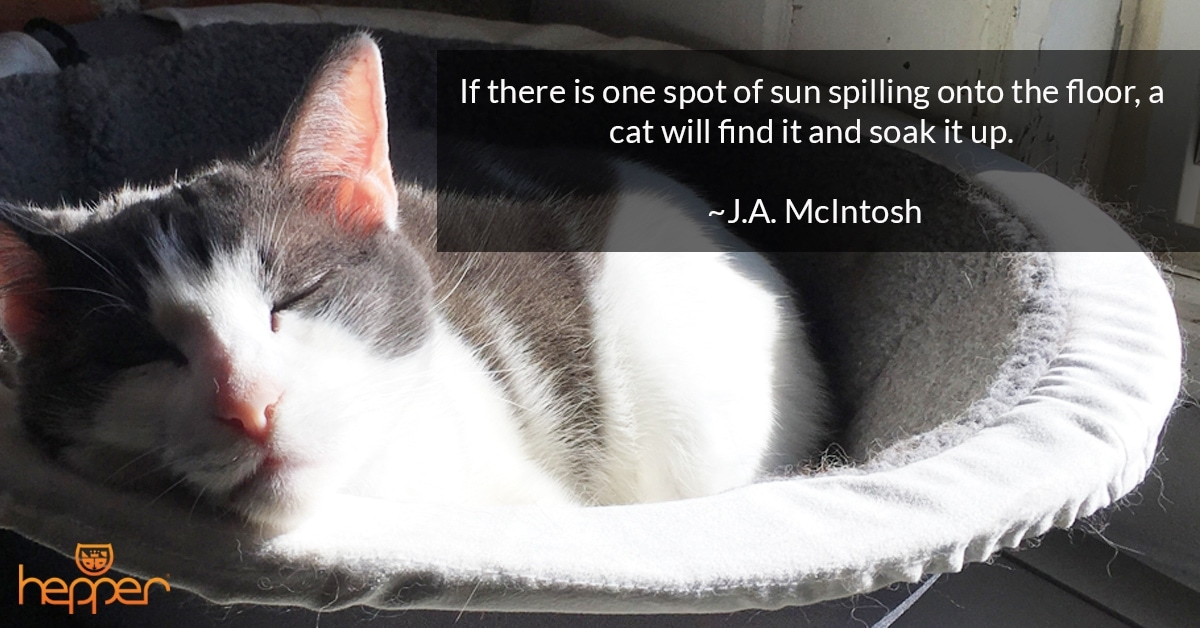 Best Cat Quotes – J.A McIntosh