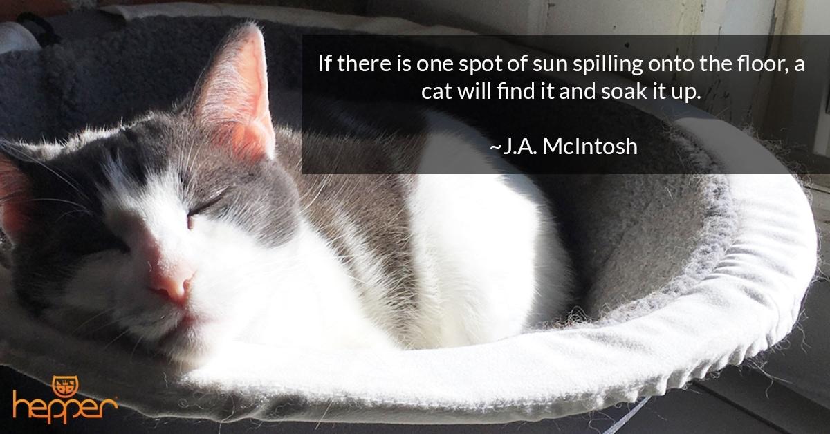 Best Cat Quotes – J.A McIntosh