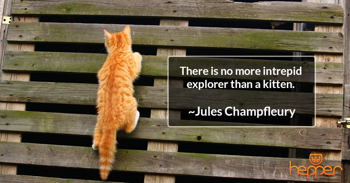 Best Cat Quotes – Jules Champfleury