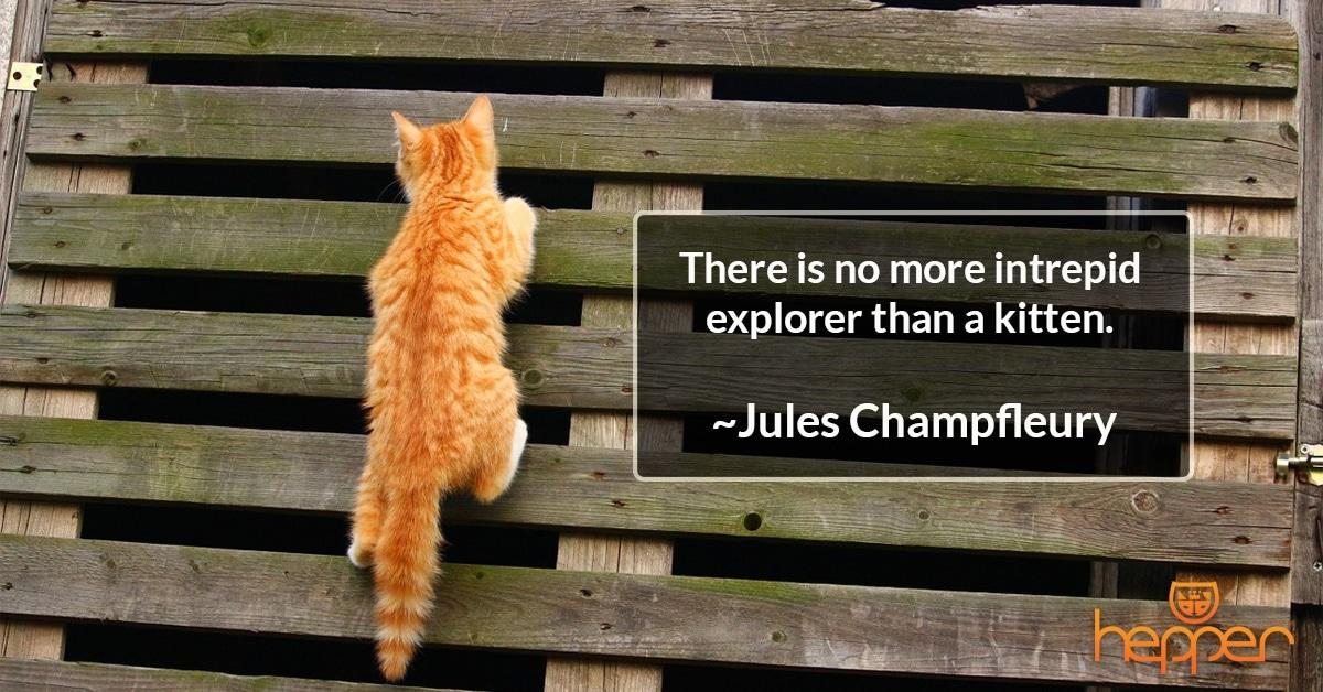Best Cat Quotes – Jules Champfleury