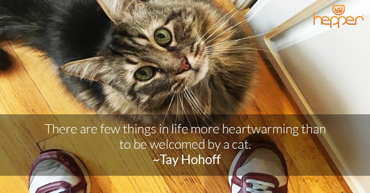Best Cat Quotes – Tay Hohoff