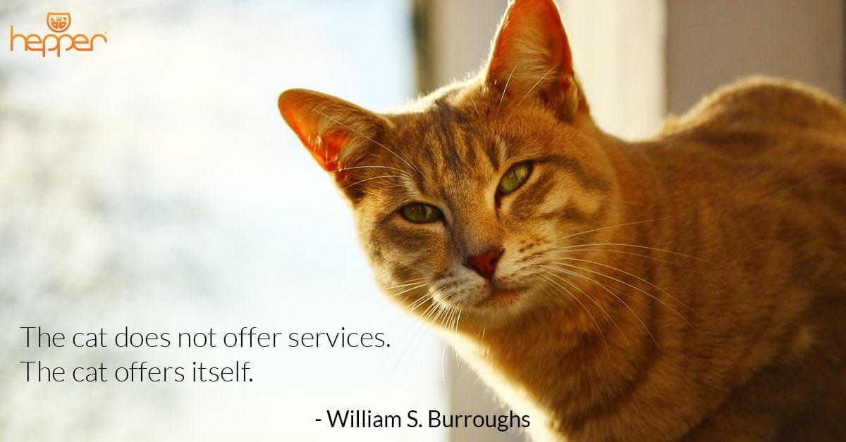 Best Cat Quotes – William Burroughs