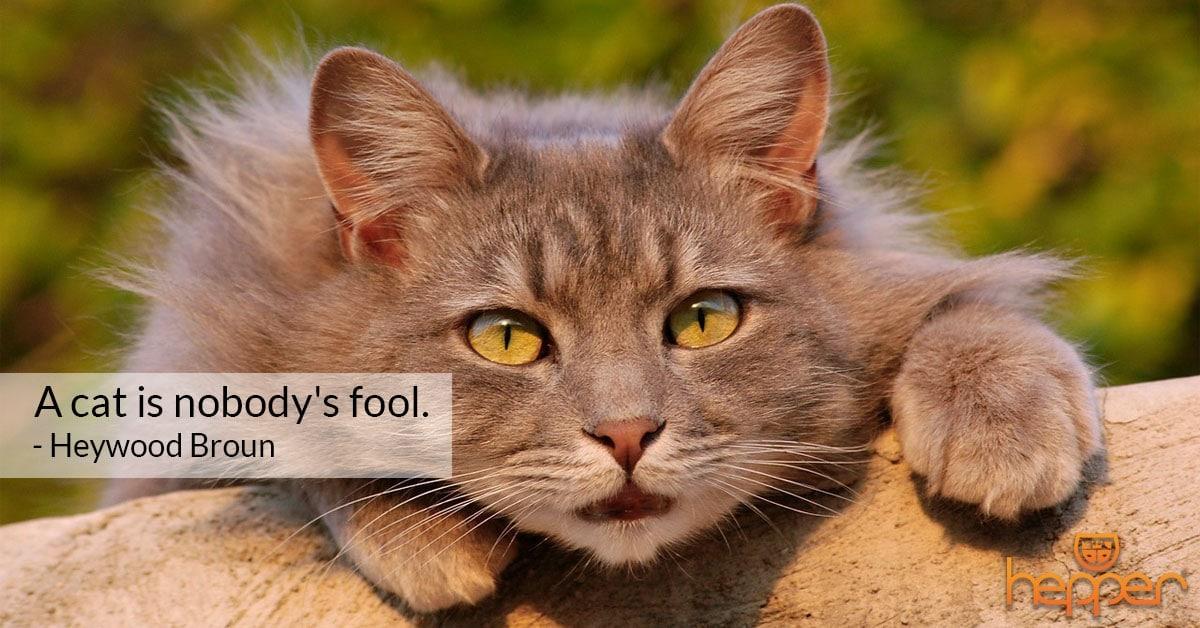 Best Cats Quotes – Heywood Broun