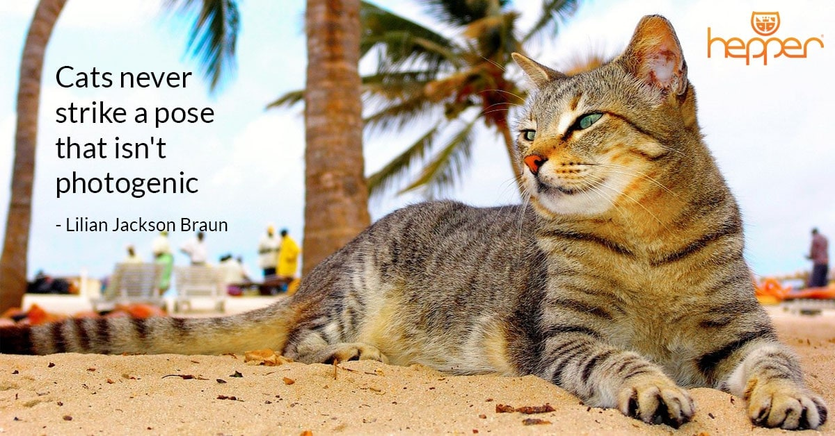 Best Cats Quotes – Lilian Jackson Braun