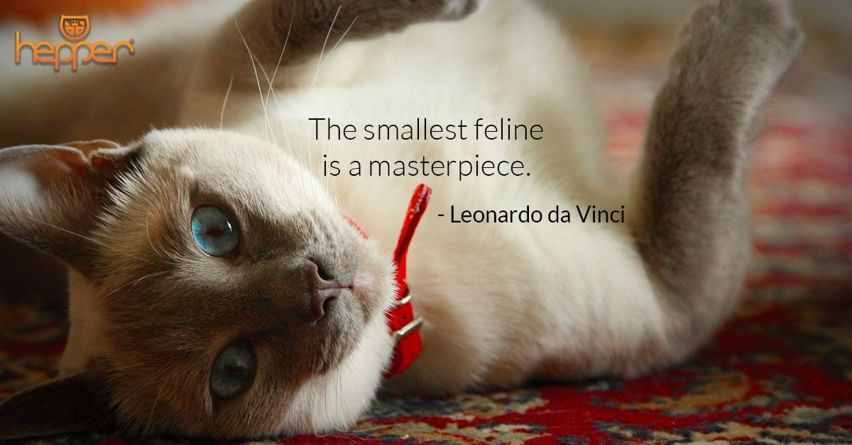 Best Cats Quotes – Leonardo da Vinci