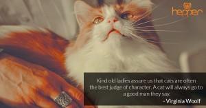Best Cats Quotes – Virginia Woolf