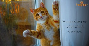Best Cats Quotes – Anonymous
