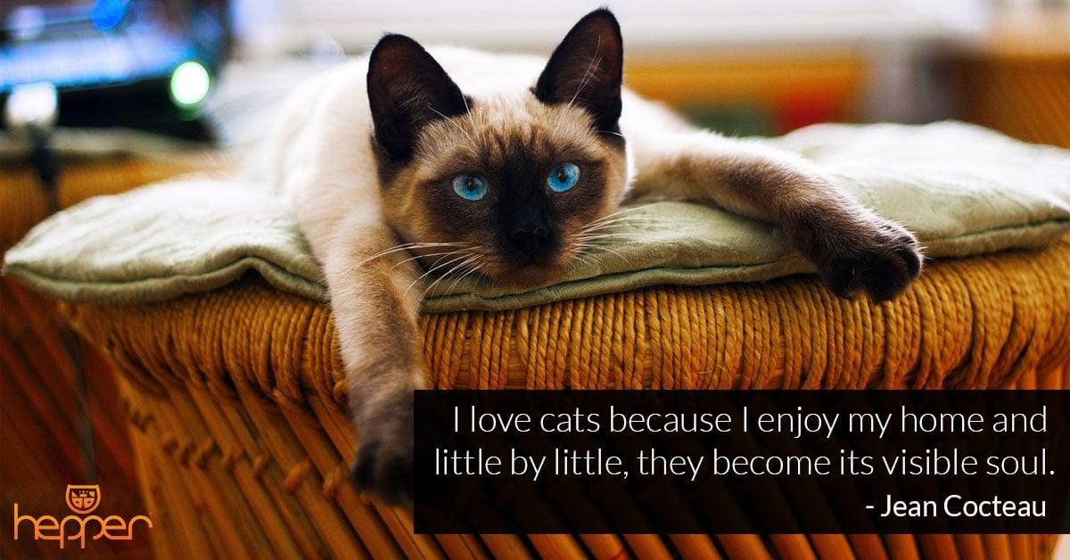 Best Cats Quotes – Jean Cocteau