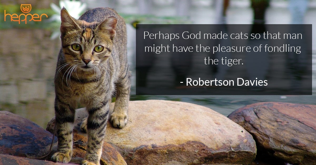 Best Cats Quotes – Robertson Davies