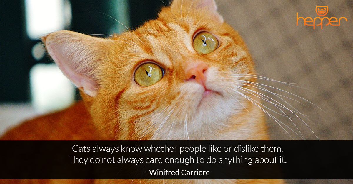 Best Cats Quotes – Winifred Carriere