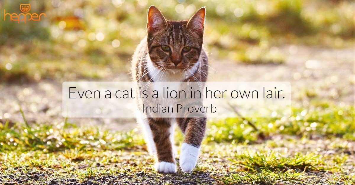 Best Cats Quotes – Indian Proverb