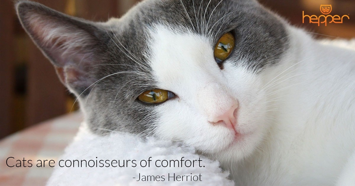 Best Cats Quotes – James Herriot