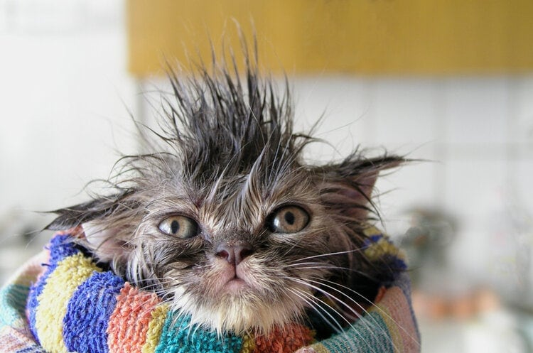 annoyed wet cat
