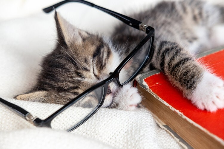 cat in glasses passed out
