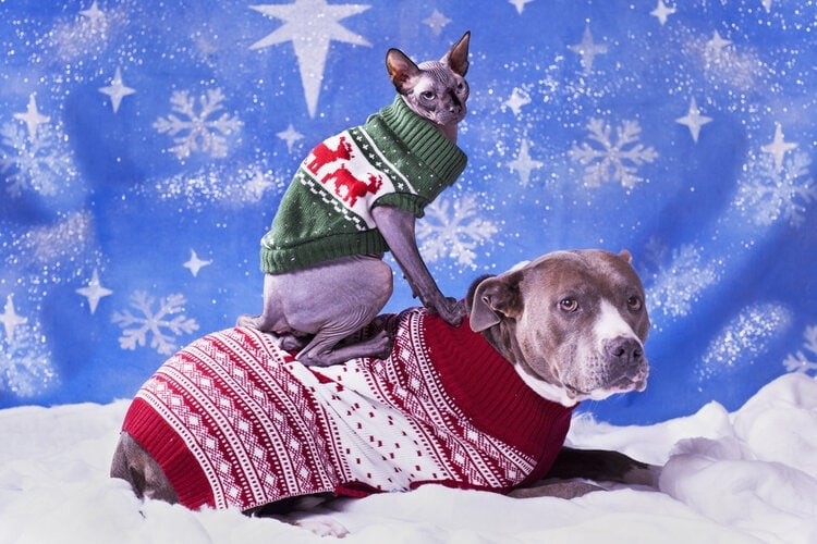 matching cat and dog in christmas sweaters