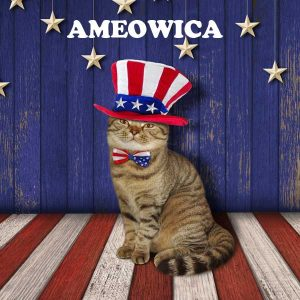 How to Keep your Cat Happy on the 4th of July