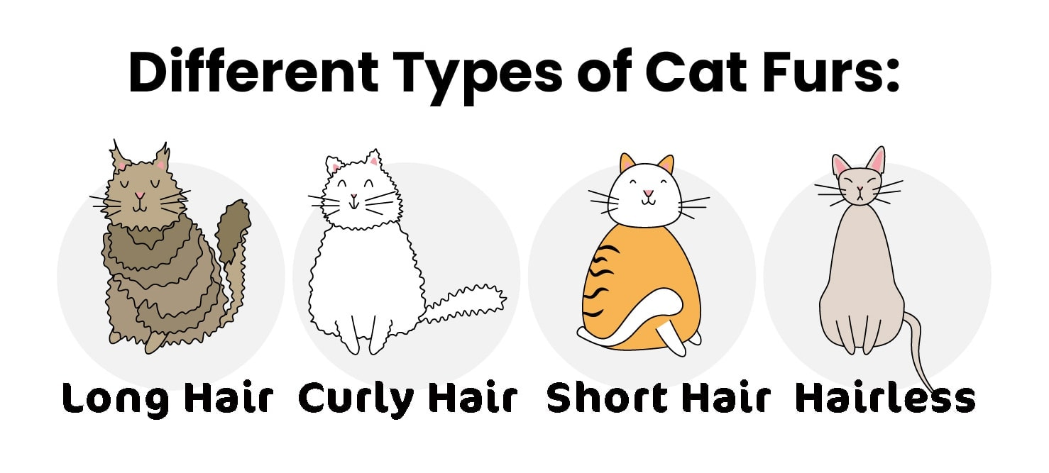 cat fur types