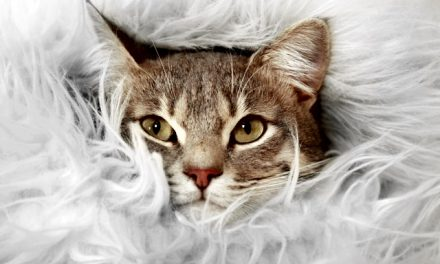 6 Tips for Dealing with Cat Fur