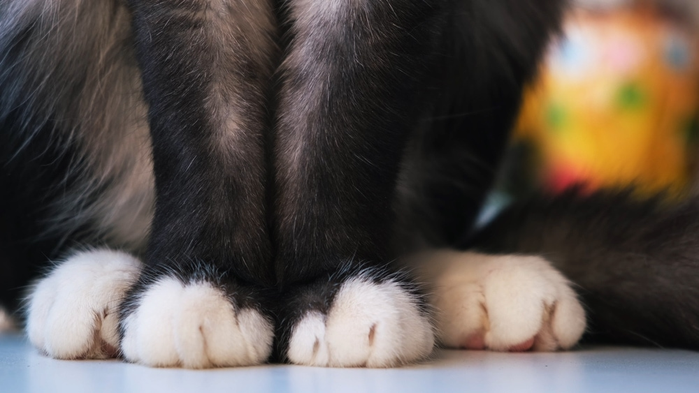 close up cat body feet guide to cat hair