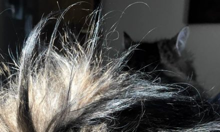 The Human's Guide to Cat Hair
