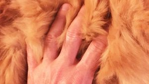 long red cat fur