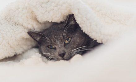 6 Creative Ways to Recycle & Repurpose Cat Fur