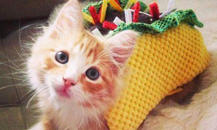 Top 10 Best Cat Costumes for Halloween 2017