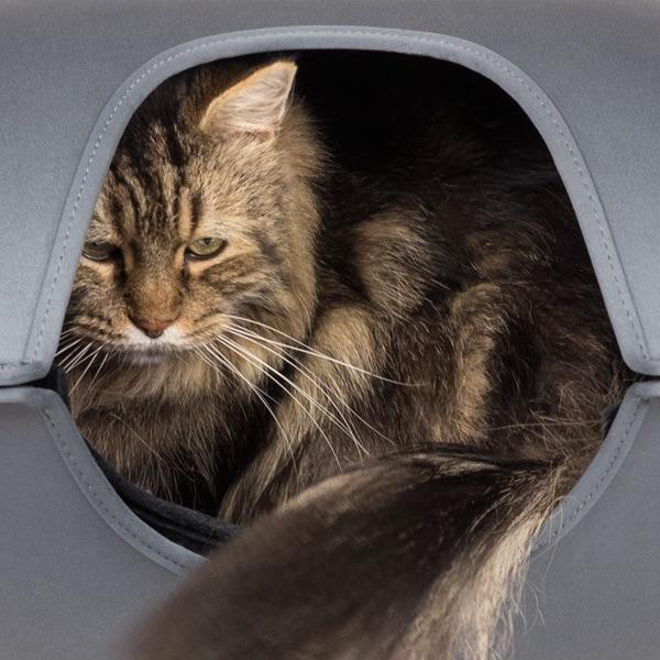 cat in hepper pod bed large door