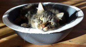 pepper in his hepper nest bed
