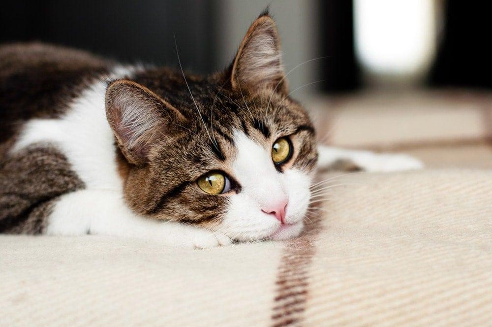 sad lonely cat