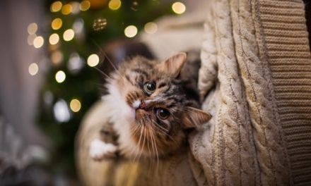 How To Show Your Cat Love Over The Holidays