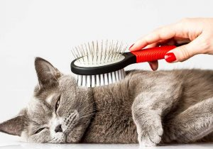 choose cat brush