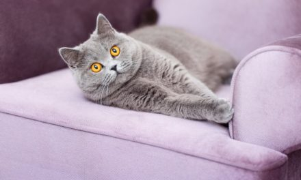 9 Ways to Keep Your Cat Safe When They're Home Alone
