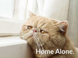 cat safe home alone
