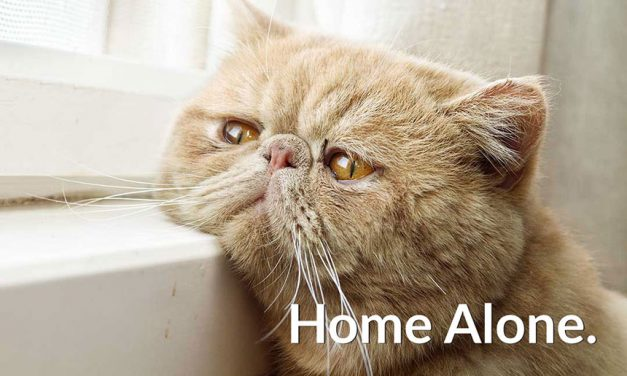 9 Ways to Be Sure Your Cat is Safe at Home