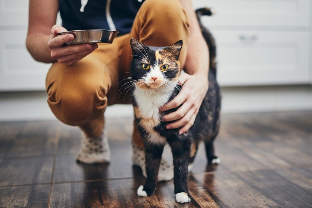 black and orange cat with man and bowl pet sitter