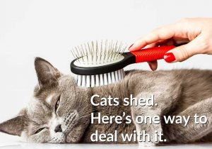 cat-being-brushed