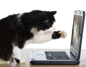 cat on skype with laptop