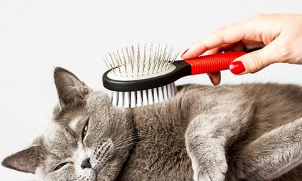 How to Choose a Cat Brush