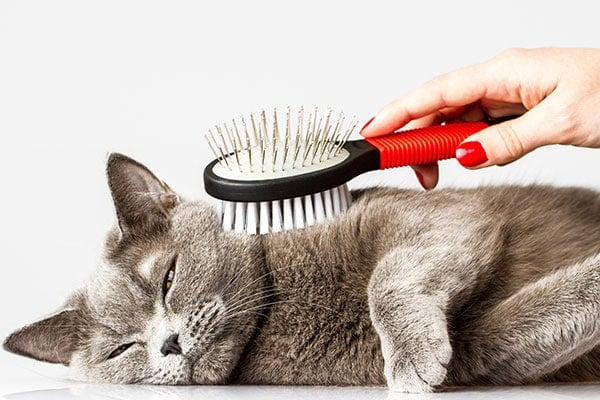 How to Choose a Cat Brush   Hepper