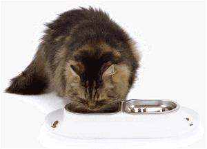 hudson eating out of his hepper nomnom pet food bowl