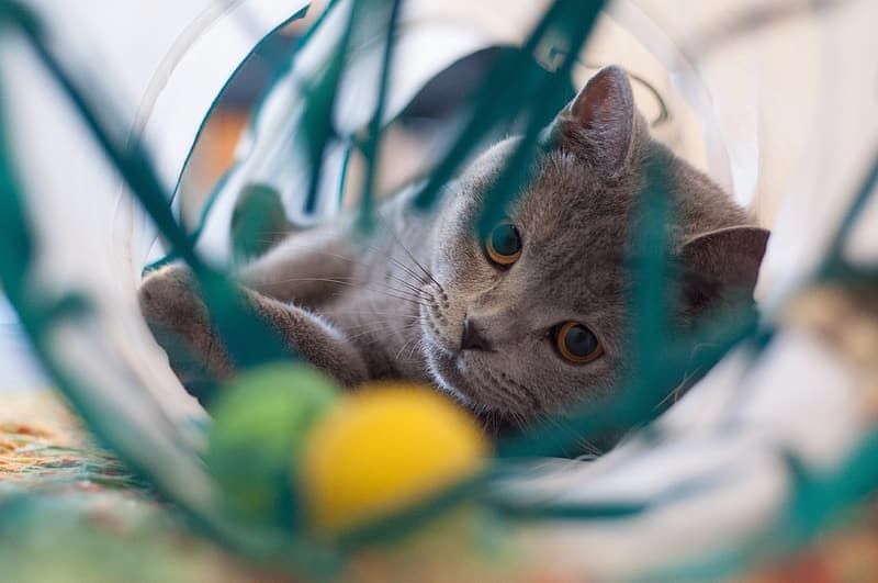 gray-cat-playing-on-container