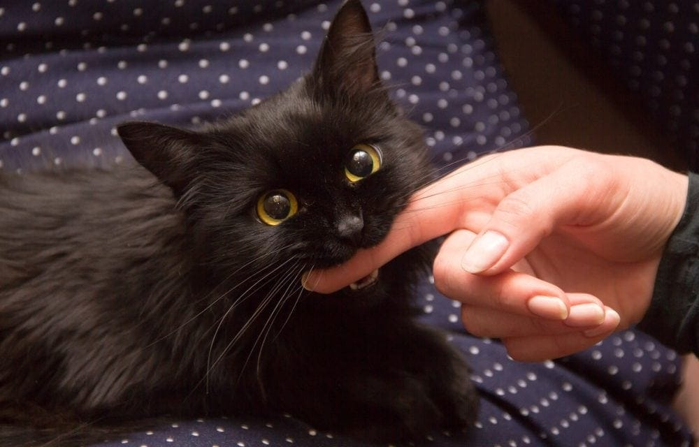 Reasons Why Cats Bite and How to Stop Them