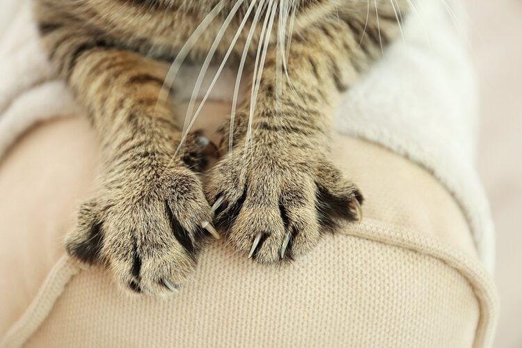 cat scratching furniture