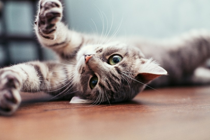100+ Best Female Cat Names of 2021: Girly, Classic, & More!